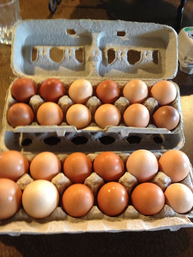 Our neighbors chickens are really producing some beautiful eggs. I can't wait for our hens to start laying. Some of these eggs are almost the size of goose eggs.  Love fresh eggs!