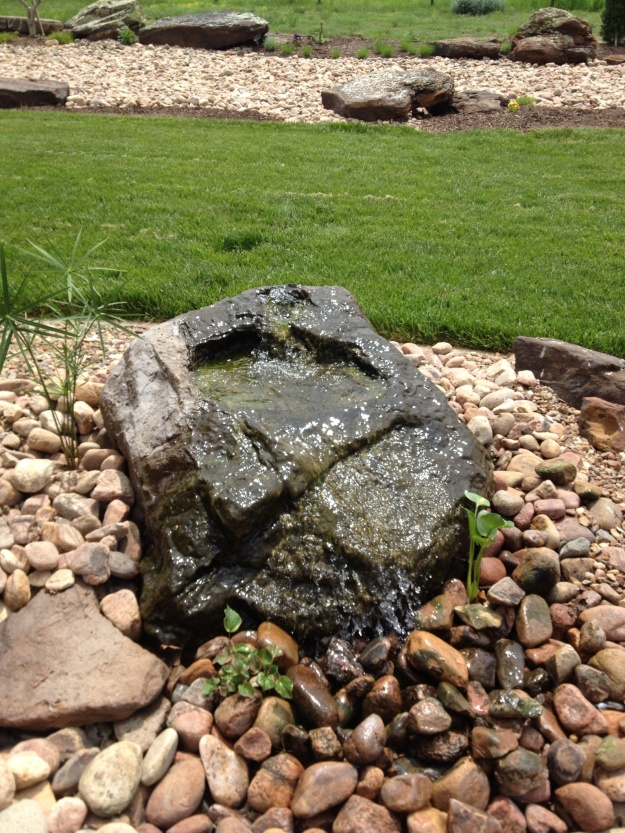 I planted a white water calla lily, a chameleon plant and papyrus around the bubbling rock.