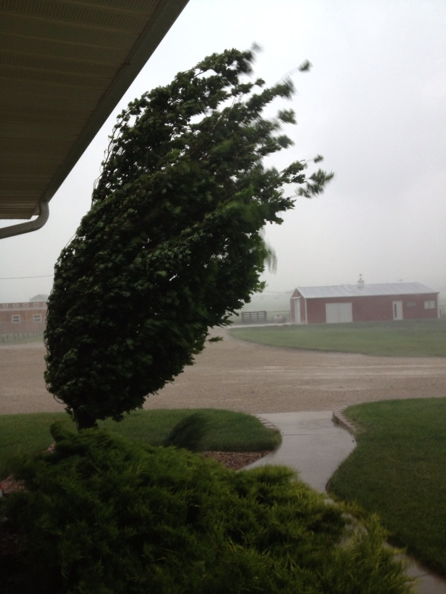 A typical Kansas thunderstorms usually starts late in the afternoon on a hot humid day.  Wylie and I had just put the chickens into their coop as it started raining.