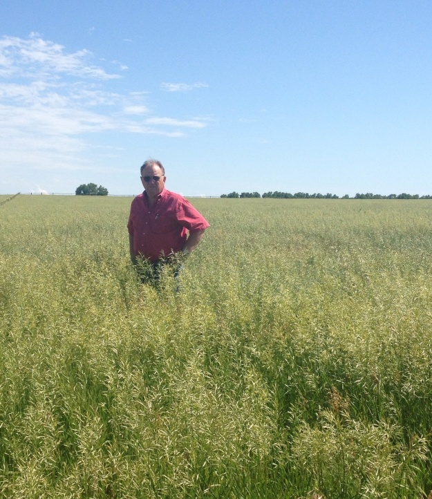 Mr. Farmer is outstanding in his field.  A beautiful crop of brome, they  will be cutting it any day.